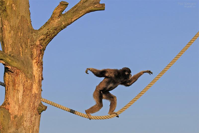 Stop monkeying around.